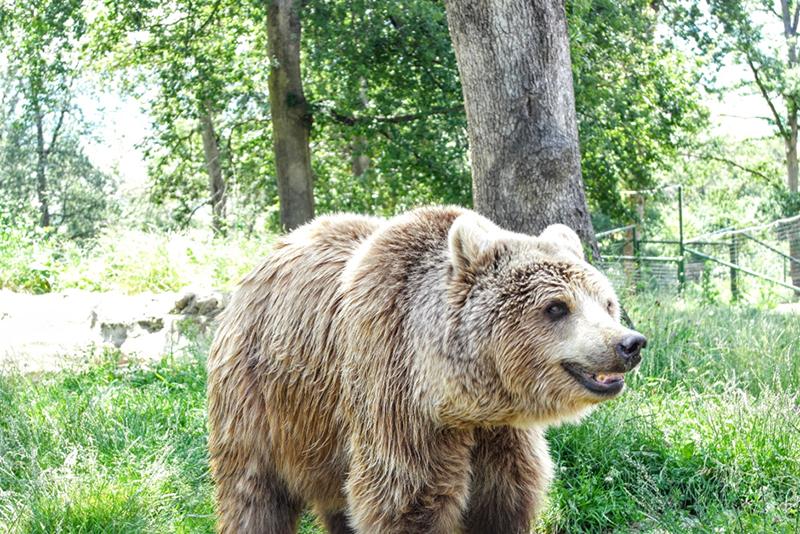 Image of bear from The Libearty Bear Sanctuary, Zarnesti